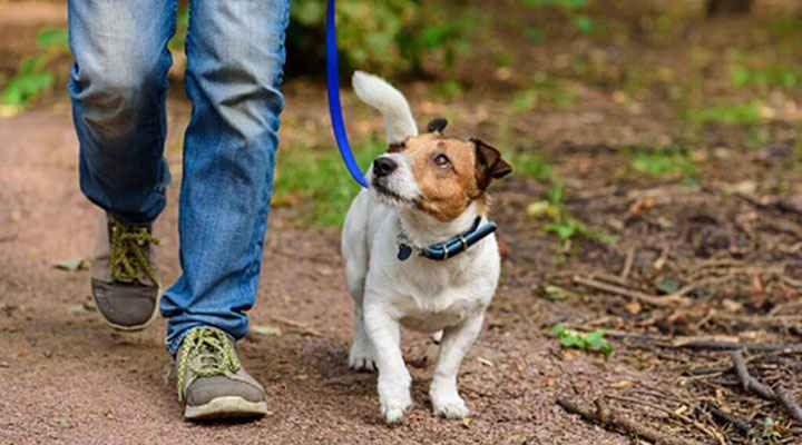 Every Pet Is Special: How to Be a Responsible Pet Owner